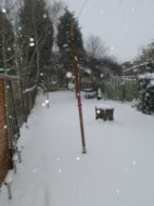 My back garden, and it's snowing again